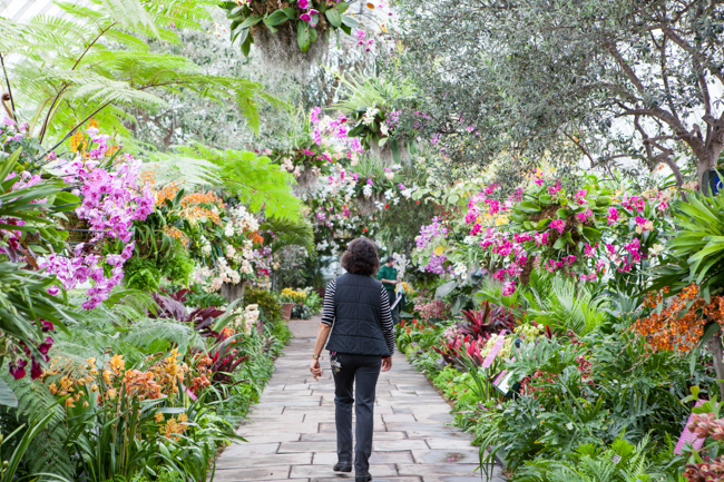 The Nybg Orchid Show Traveling Back In Time With The World 39 S Most Adventurous Flower The