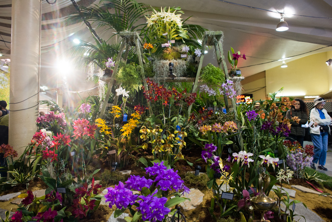 Display by Sunset Valley Orchids. Check out the Darwin orchids at the top.