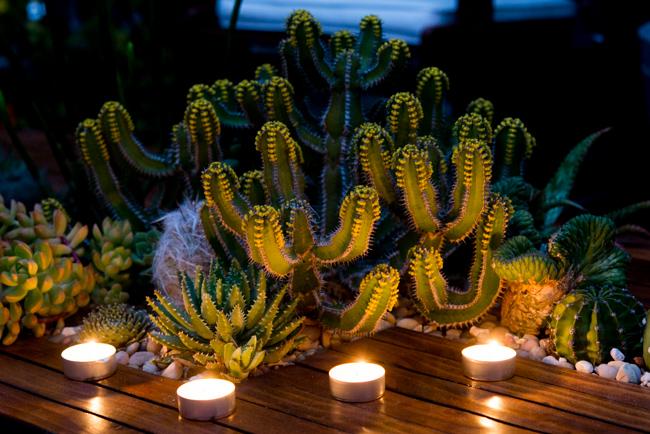 Euphorbia avasmontana - Succulent table by Ryan Benoit Design