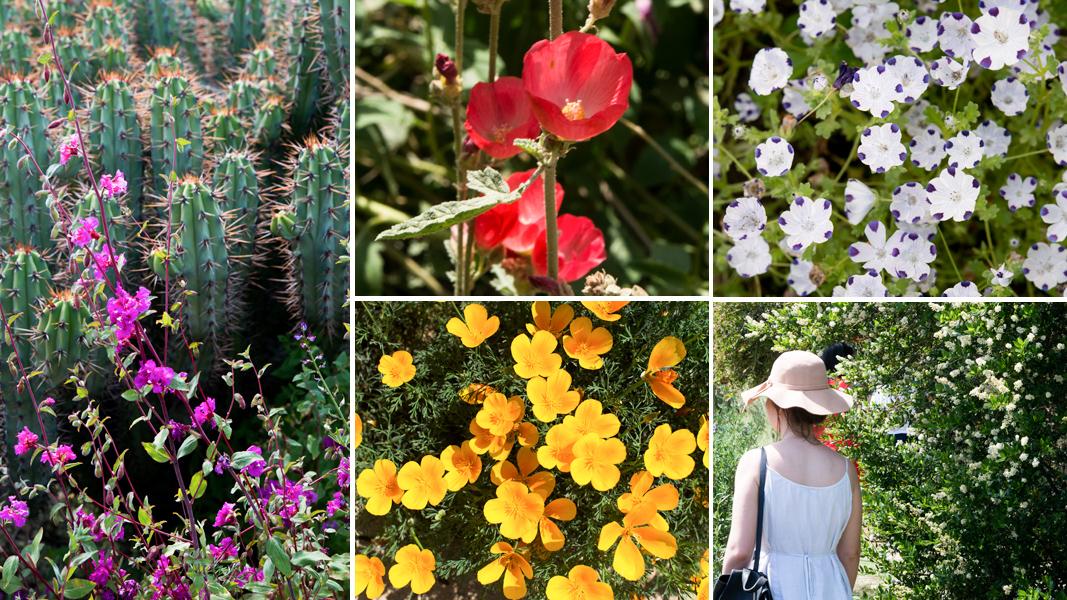 California Native Plants For The Garden