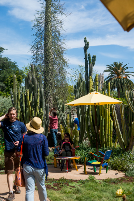Theodore Payne Foundation Native Plant Garden Tour