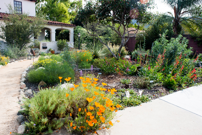Beyond Succulents 10 Favorites from a California Native Plant