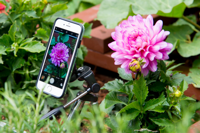 DIY garden tripod