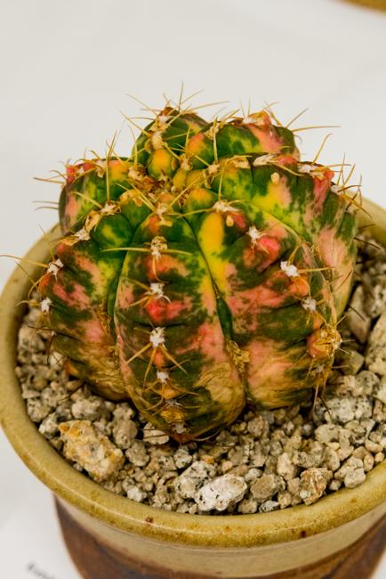 2016 LACSS Drought Tolerant Show and Plant Sale