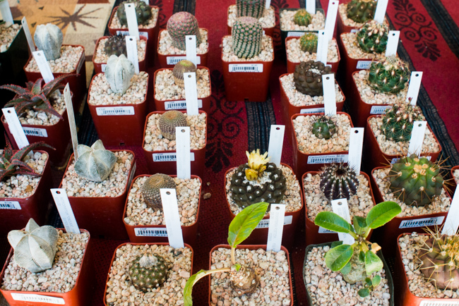San Diego Cactus and Succulent Society 2016 Plant Sale