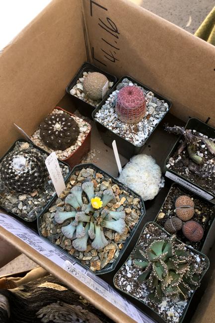 Succulent show haul